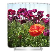 Dreamsicle  Shower Curtain