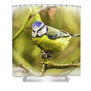 Dreamy Blue Tit Chirping Shower Curtain