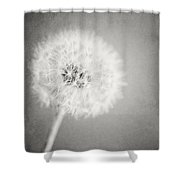 Dreamy Dandelion II  Shower Curtain
