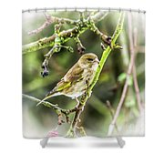 Dreamy Greenfinch. Shower Curtain