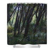 Dreamy Marjan Forest In Croatia Shower Curtain