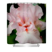 Dreamy Pink Iris Shower Curtain