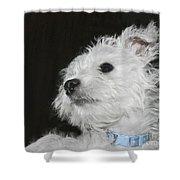Dreamy Puppy Shower Curtain