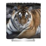 Dreamy Tiger Shower Curtain by Sandy Keeton