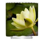 Dreamy Water Lilly Shower Curtain