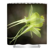 Dreamy Yellow Columbine Shower Curtain