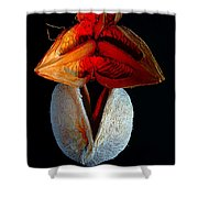 Composition With Dried Flowers Red Hat. Shower Curtain
