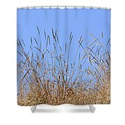 Dried Grass Blue Sky Shower Curtain