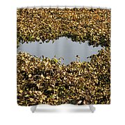 Dried Leaves In A Pond Shower Curtain
