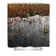 Dried Lotus In The Lake Shower Curtain