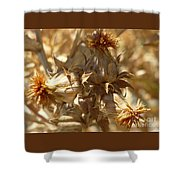 Dried Safflower Shower Curtain