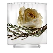 Dried White Rose Shower Curtain
