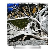 Drift Wood Shower Curtain