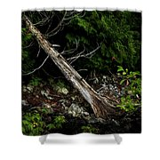 Drifted Tree Shower Curtain