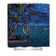 Driftwood 01 Shower Curtain