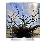 Driftwood And Roots Hunting Island Sc Shower Curtain by Lisa Wooten
