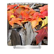 Driftwood Autumn Leaves Art Prints Baslee Troutman Shower Curtain