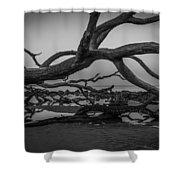 Driftwood Beach 4 Shower Curtain