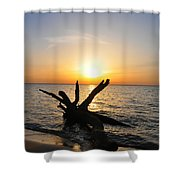 Driftwood Beach Shower Curtain
