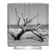 Driftwood Beach In Black And White Shower Curtain