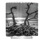 Driftwood Black And White Shower Curtain