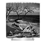 Driftwood Bw Fine Art Photography Print Shower Curtain
