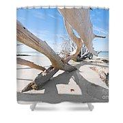 Driftwood C141414 Shower Curtain