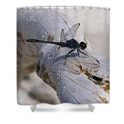 Driftwood Dragofly Shower Curtain