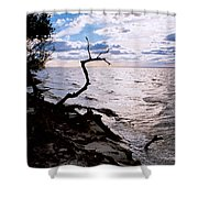Driftwood Dragon-barnegat Bay Shower Curtain