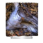 Driftwood In Lahonda Shower Curtain