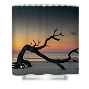 Driftwood Morning Shower Curtain
