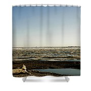 Driftwood On Arctic Beach Shower Curtain