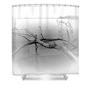 Driftwood Vignette - Grayscale Shower Curtain