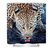 Drinking Leopard Shower Curtain