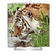Drinking Tiger Shower Curtain