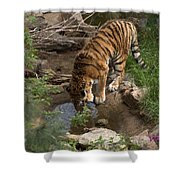 Drinking Tiger Shower Curtain
