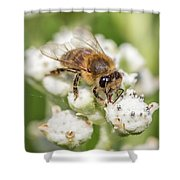 Drinking Up The Nectar, Apis Mellifera Shower Curtain