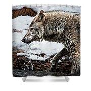 Drinking Wolf Shower Curtain