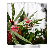 Drip And Drop Shower Curtain