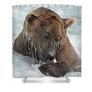 Dripping Grizzly Bear Shower Curtain