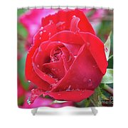 Dripping In Beauty - Double Knock Out Rose Shower Curtain