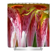Dripping Stargazer Shower Curtain