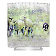 Driving Sheep Shower Curtain