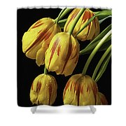 Drooping Tulips Shower Curtain