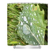 Droplet Shower Curtain