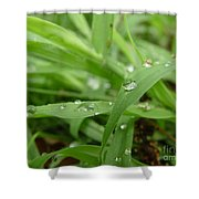 Droplets 02 Shower Curtain