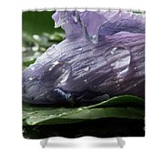Droplets Of Nature Shower Curtain