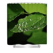 Droplets On A Leaf  Shower Curtain