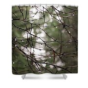 Droplets On Branches Shower Curtain