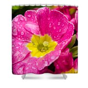 Droplets On Flower Shower Curtain